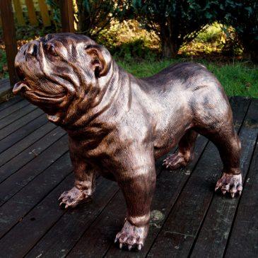 Englische Bulldogge ohne Halsband