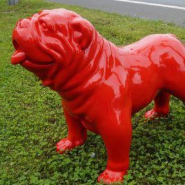 Die rote englische Bulldogge
