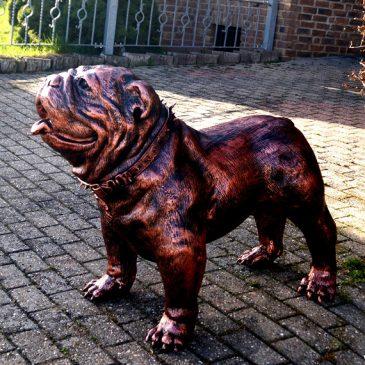 Englische Bulldogge mit Halsband